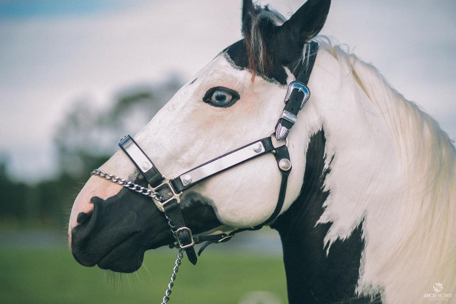 pre-casamento-cavalos-bruno-e-jaqueline-8